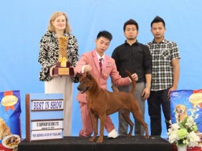 Champion Of Champions Dog Show 2015_AB3