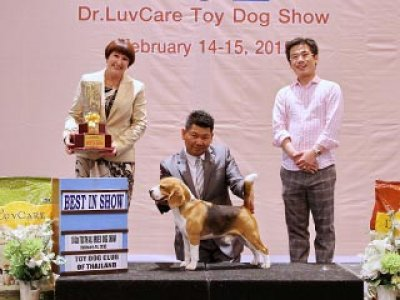 Central Toy Dog Championship Dog Show 1/2015_AB2