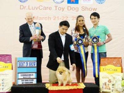 Toy Dog Show Championship Dog Show 2/2015_AB2
