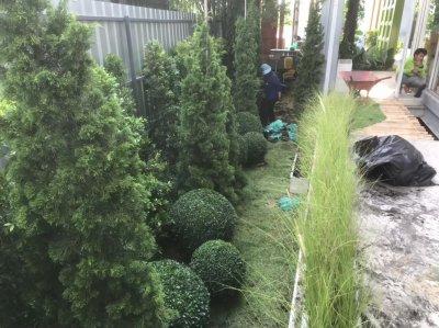 สวนและระบบกรองบ่อ