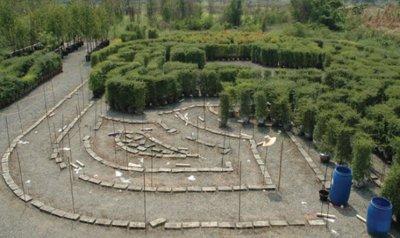 Export Maze