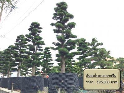 ต้นไม้ในสวน