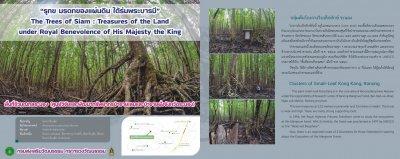ต้นโกงกางยักษ์อายุ 200 ปี ต้นไม้แห่งสยาม