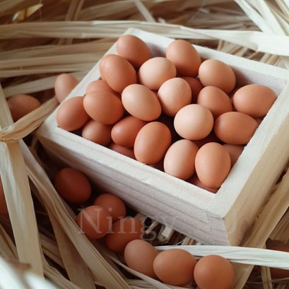 100x Loose Egg Dollhouse Miniatures Food Kitchen Supply Wholesale Price