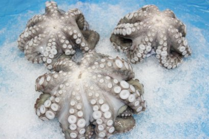 Frozen Giant Octopus