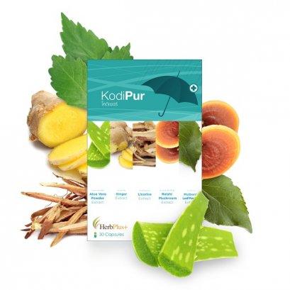 Kodi pur สมุนไพรรักษาอาการหวัด
