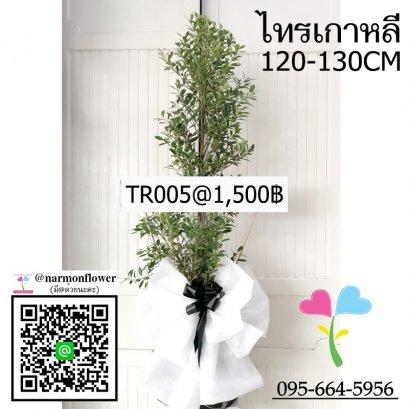 พวงหรีดต้นไทรเกาหลี TR005