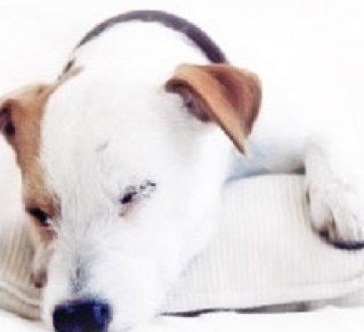 Pet hotel iVET animal hospital opens 24 hour