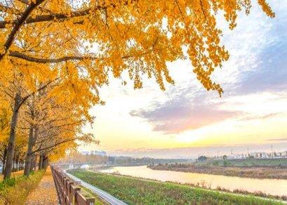 ทัวร์เกาหลี-ใบไม้เปลี่ยนสี