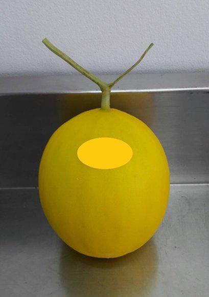 เมล็ด สีทองเนื้อส้ม (Goldendragon) เมล่อนผิวเรียบ (20s)