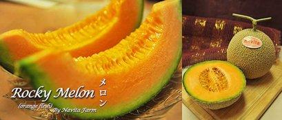 เมล็ดร็อคกี้เนื้อสีส้ม(100s)