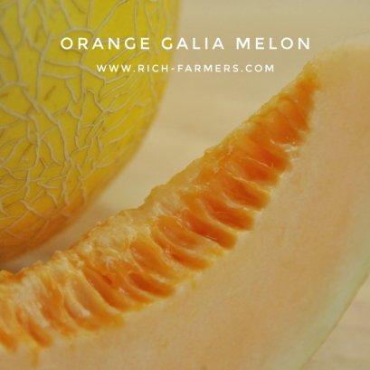 กาเลียเมล่อนเนื้อส้ม (100s)