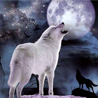 3d picture design 3d picture with frame picture 3d poster wolf
