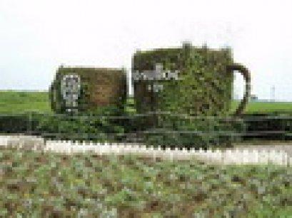 O'Sulloc Tea Museum, Jeju, Korea
