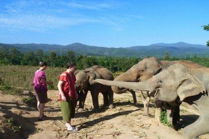 ดูแลช้างเต็มวัน (ไม่มีขี่ช้าง) Chang Sanctuary
