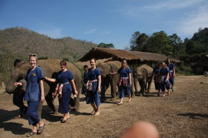 ดูแลช้างครึ่งวันตอนเช้า Chang Thai Heritage