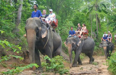 Elephant Trekking for 45 mins & Waterfall