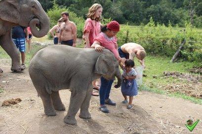 กิจกรรมเลี้ยงช้างครึ่งวันบ่าย ที่ Elephant Village Sanctuary