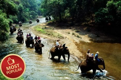 One Day Elephant Safari,Northern Trip, Chiang Mai Thailand