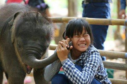 Maewang Elephant (A):骑大象 / 给大象洗澡 / 自喂食大象