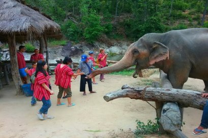 Half Day Ming Elephant Sanctuary Village