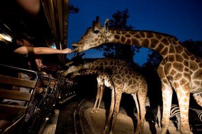 清迈夜间动物园车票