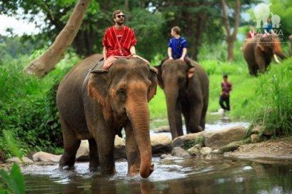 照顾关怀大象骑大象一日游Patara Elephant Farm