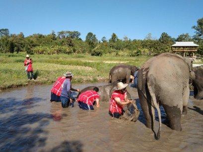 Half Day Afternoon Phoenix Elephant Sanctuary