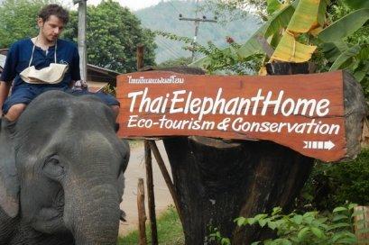 โปรแกรมฝึกช้างเต็มวัน (ขี่ช้าง) Thai Elephant Home