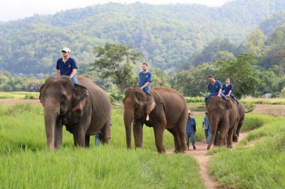 ฝึกช้างครึ่งวันตอนเช้า (ขี่ช้าง) Thai Elephant Home