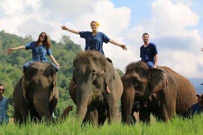 Half Day Afternoon Thai Elephant Home Training