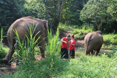 One Day Toto's Elephant Sanctuary