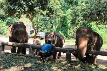 ดูแลช้างครึ่งวันตอนบ่าย Toto's Elephant Sanctuary