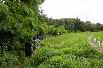 One Day Trekking Maewang (South Area)