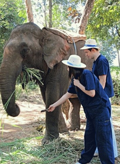 2 Days Chiangmai Elephant Training