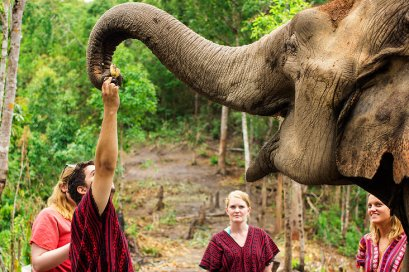 Elephant jungle sanctuary 2 days 1night