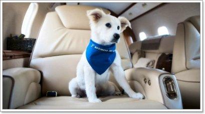 เตรียมตัวพาน้องหมาไปต่างประเทศ