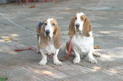 สุนัข ถ่ายเป็นเลือด ( Hemorrhagic Gastroenteritis (HGE)