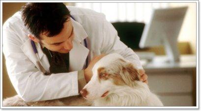 โรคผิวหนังอักเสบเป็นหนองในสุนัข (Canine Pyoderma)