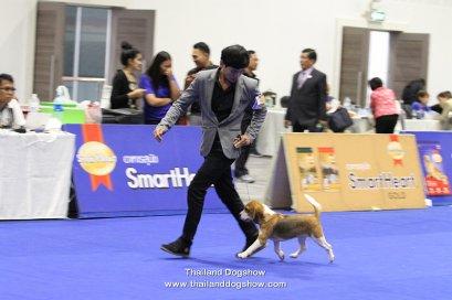 JUDIE Beagle Dogs