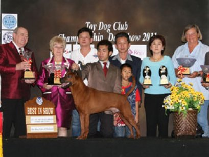 TOY DOG CLUB CHAMPIONSHIP DOG SHOW 2011
