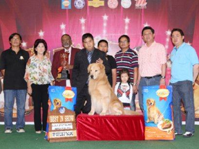 THE MALL TOY DOG CHAMPIONSHIP SHOW 1/2012(AB1)