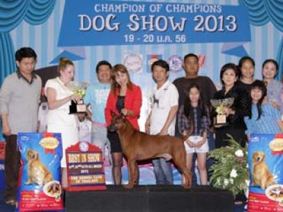 Champion Of Champions Dog Show 2013(AB2)