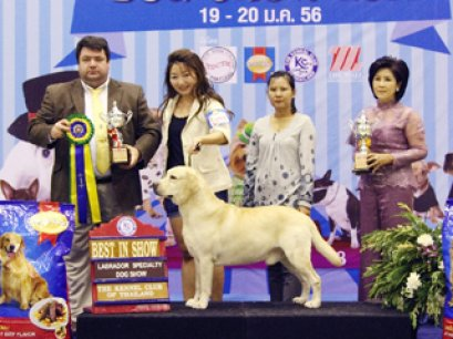Labrador Retriever Specialty Champions Dog Show