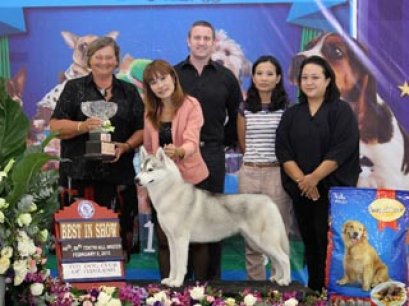 The Mall Toy Dog Championship Dog Show 1/2013(AB1)