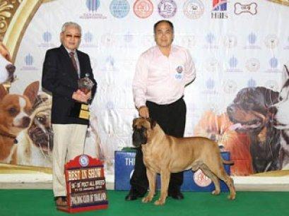 TAWANNA NGAMWONGWAN NATIONAL DOG SHOW 2014(AB2)