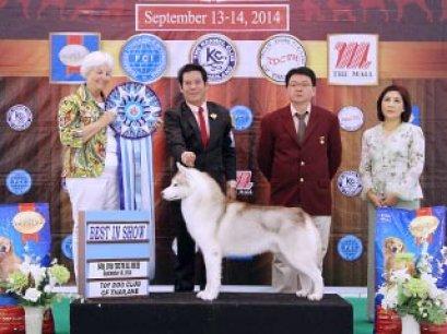 The Mall Toy Dog Championship Dog Show 6/2014_AB4