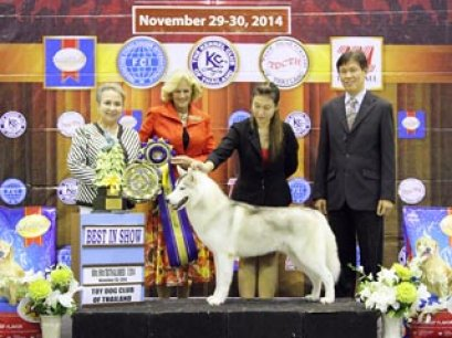 The Mall Toy Dog Championship Dog Show 7/2014_AB4