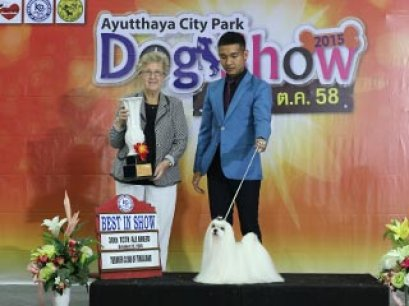 38th TCTH ALL BREED CHAMPIONSHIP DOG SHOW