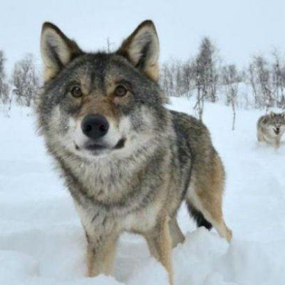 ฟินแลนด์: ADVENTURE (ICEBREAKER) (AY)